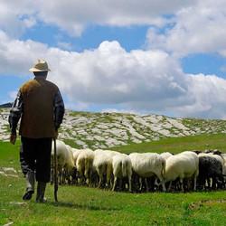 7/12/15 The Lord is My Shepherd