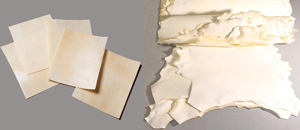 Parchment hides and cut sheets