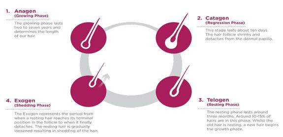 Hairfall Hair loss Hair problems Hair types hair stages
