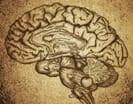 Mental health specialist psychiatrist professional help