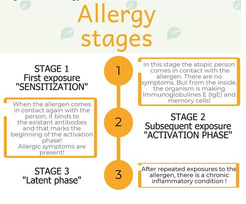 stages of allergy