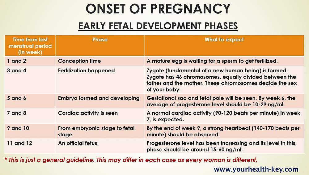 Onset of Pregnancy : Early Fetal Development Phases