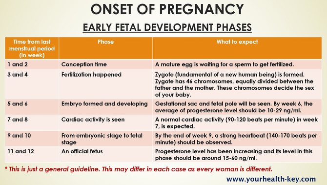 ONSET OF PREGNANCY: EARLY FETAL DEVELOPMENT PHASES