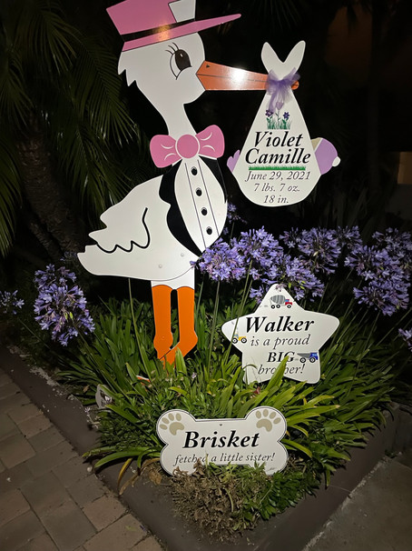 The Daily Stork ~ 619-972-3724 ~ San Diego, California ~ Stork Yard Sign  ~ Siblings Sign ~ Dog Bone