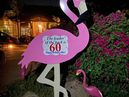 The Daily Stork ~ 619-972-3724 ~ Poway, California ~ Birthday Flamingo