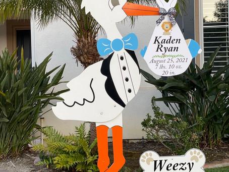 The Daily Stork ~ 619-972-3724 ~ Carlsbad Boy Stork Yard Sign Rental ~ Dog Bone Sign