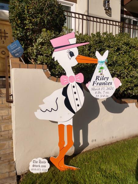 The Daily Stork ~ 619-972-3724 ~ Carlsbad, Ca ~ Girl Stork Yard Sign