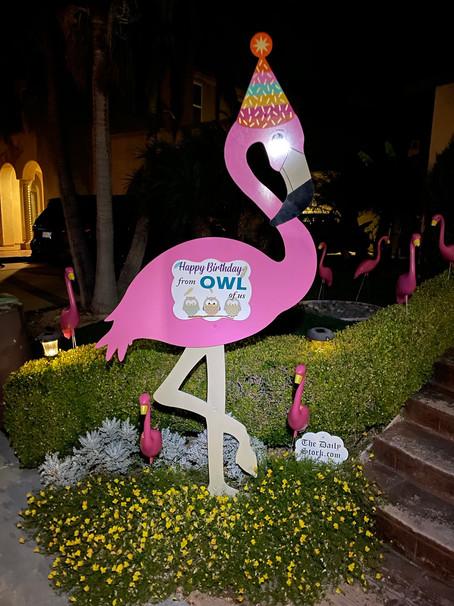The Daily Stork ~ 619-972-3724 ~ Eastlake, Ca ~ Birthday Flamingo Surprise