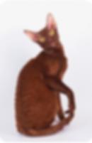 Коты питомника