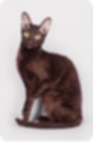 Кошки питомника