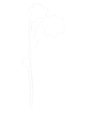 flowers-side_edited.png