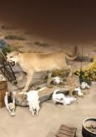 Exhibición de vida silvestre en el Museo Gilman