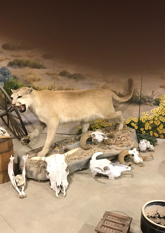 Wildlife exhibit at Gilman Museum