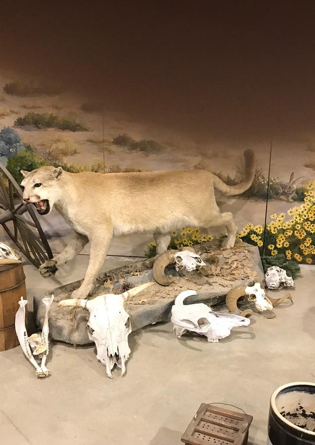 Wildlife exhibit at Gilman Museum