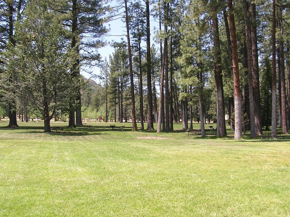 Pines and meadows at Hurkey Creek