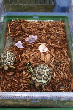 Turtles on display