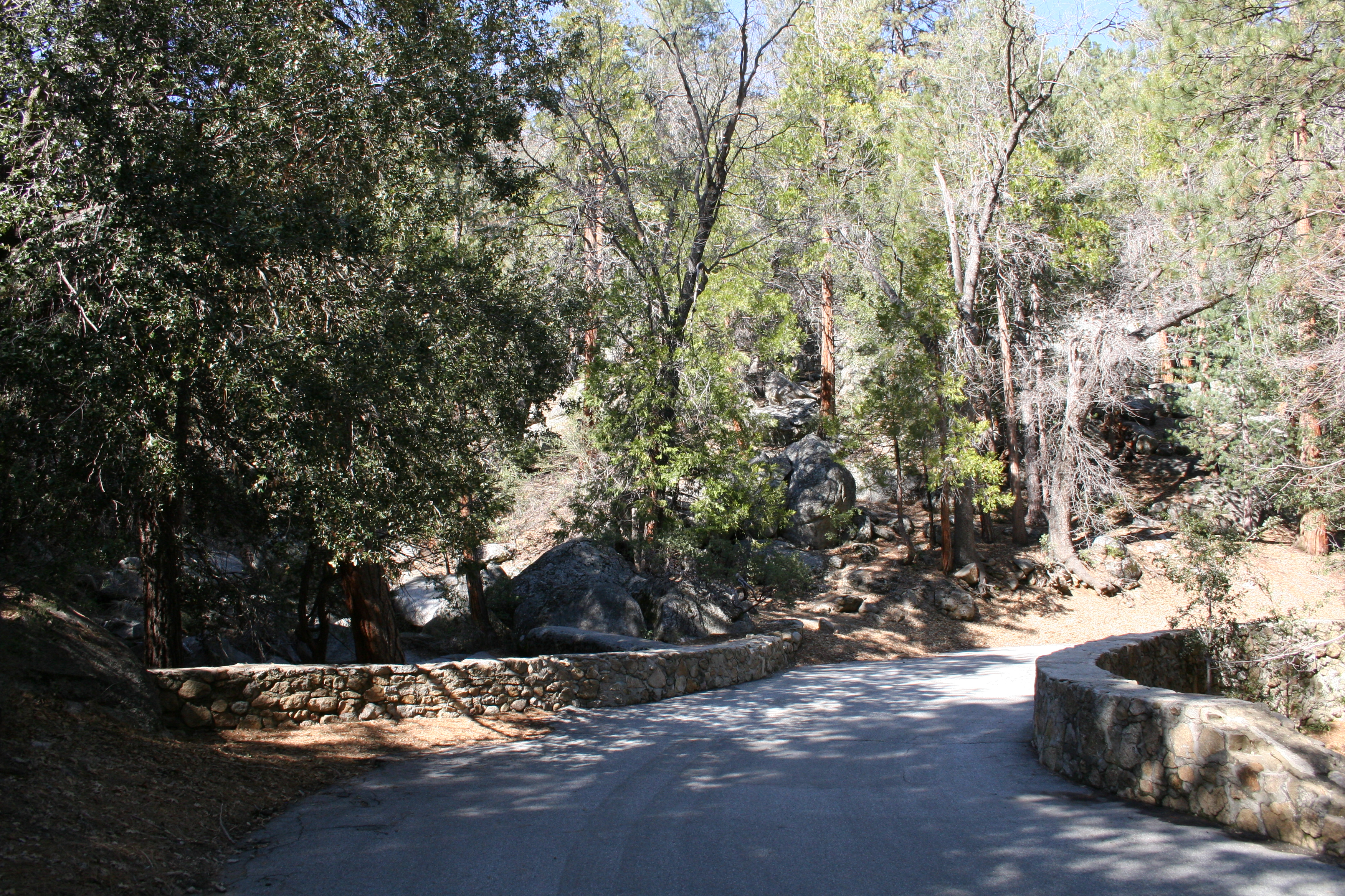 Scenic Idyllwild trails