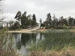 Foliage along Lake Skinner