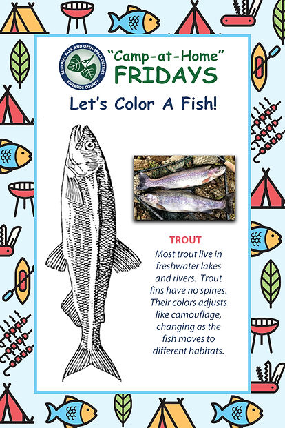 CampatHomeDay_Camp_Fish Activity Page.jp
