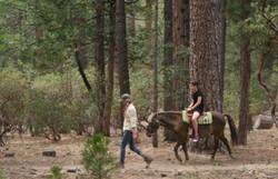Horse rider at Idyllwild