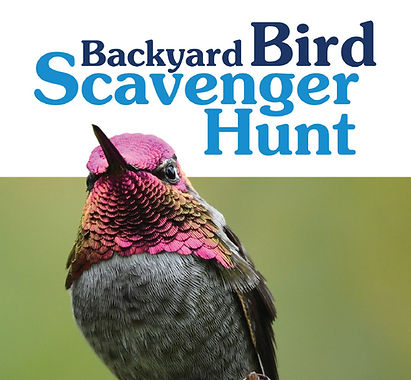 Bird Scavenger Hunt booklet thumbnail.JP