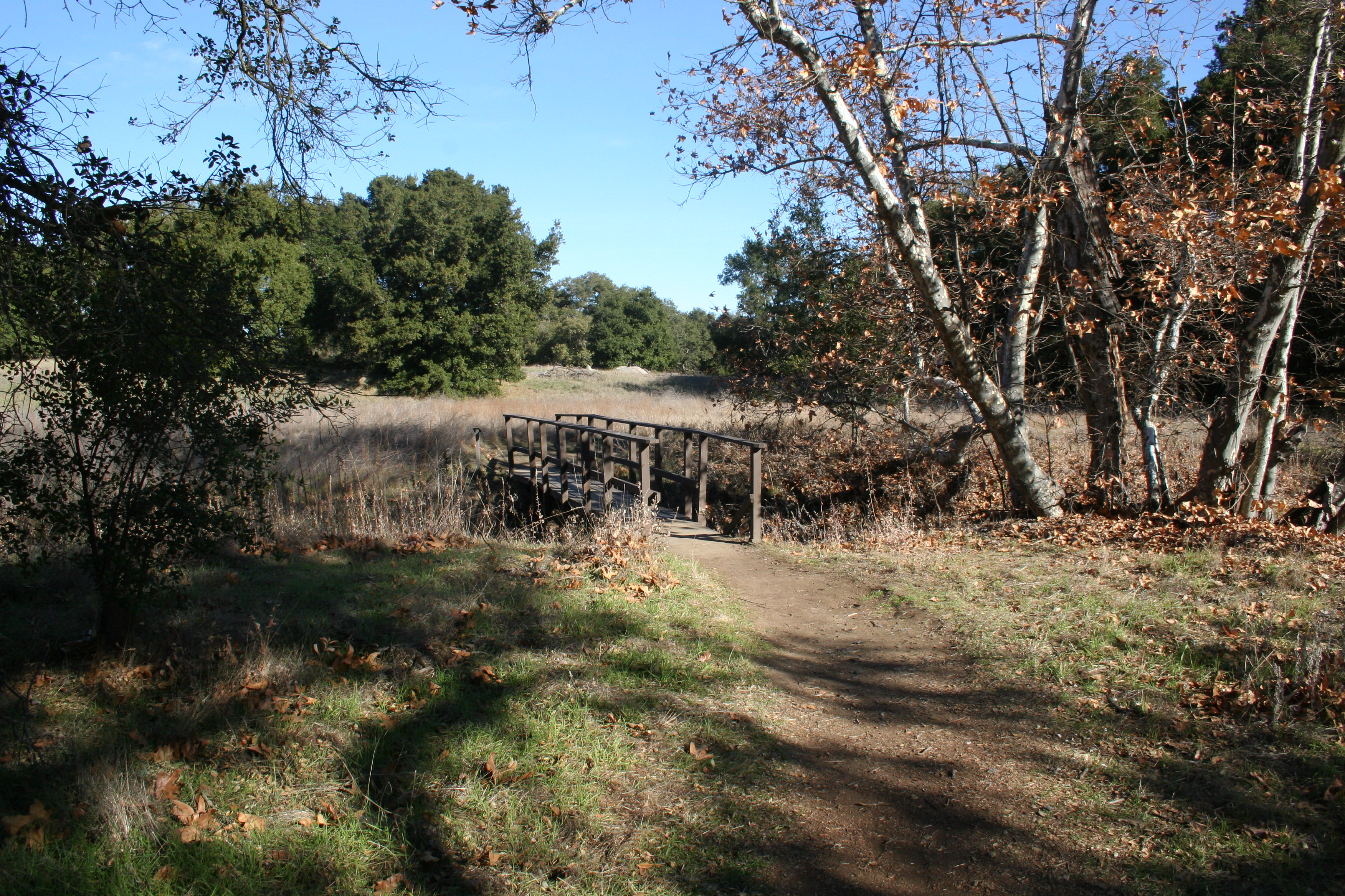 A bridge over the vernal pools