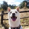 Dog visitor.jpg