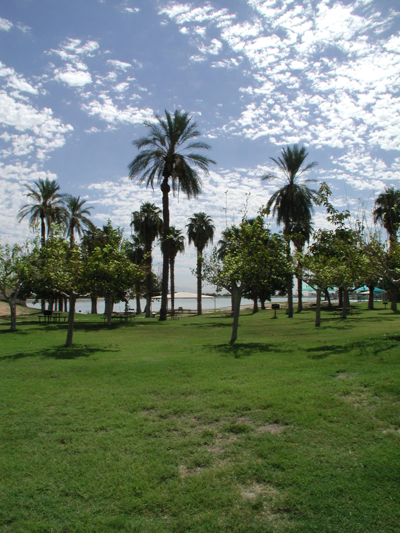 Scenic palms and meadow at Cahuilla