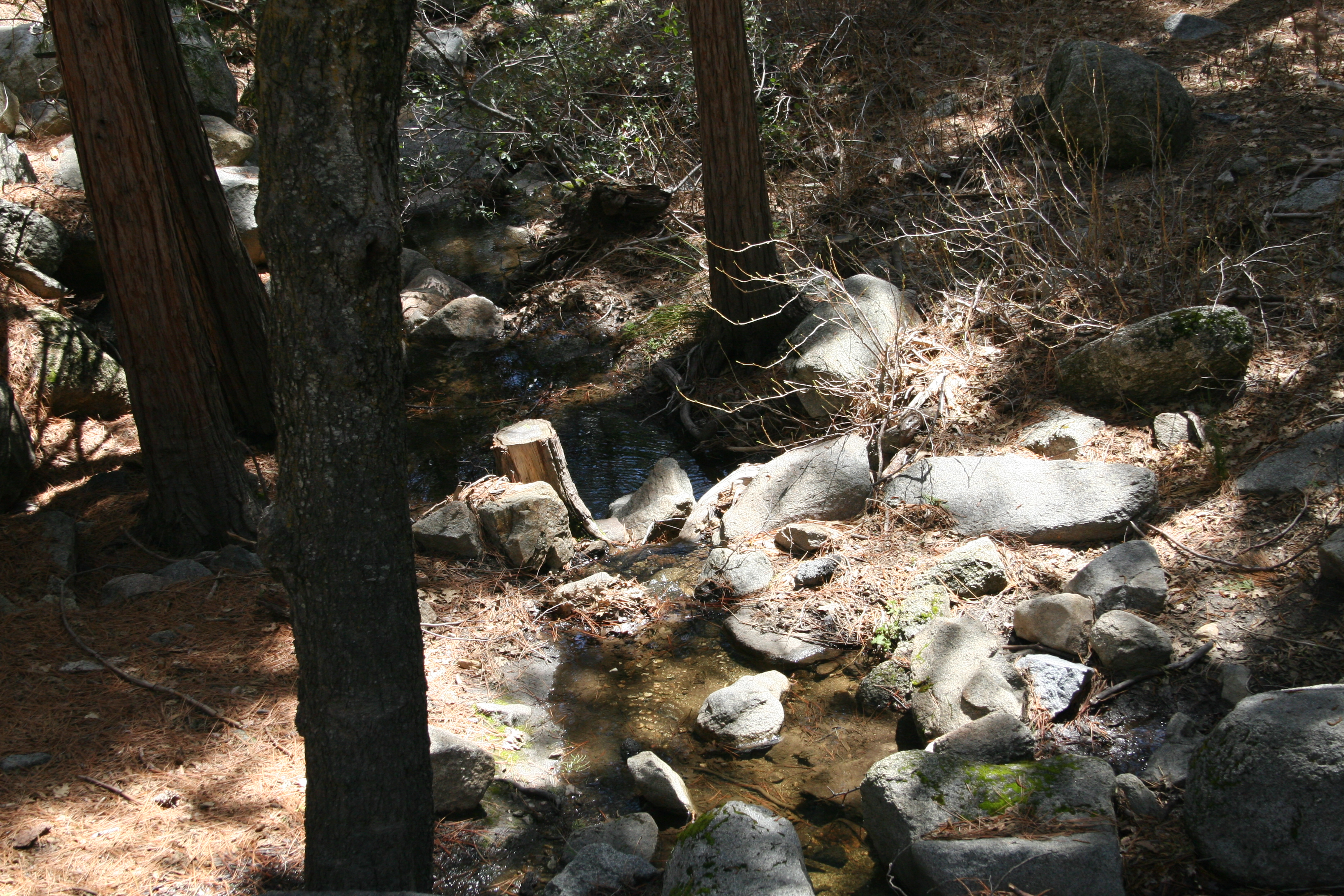 Nature scene at Idyllwild