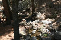Nature scene at Idyllwild