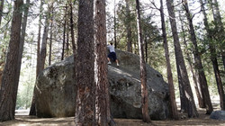 Climbing a big rock among the pines