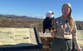 Bald Eagles Love the Watershed video thu