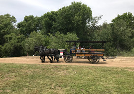 Paseo en carruaje tirado por caballos en Gilman