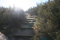 Trail pathway along stairs