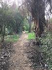 Trail at Kabian Park.JPG