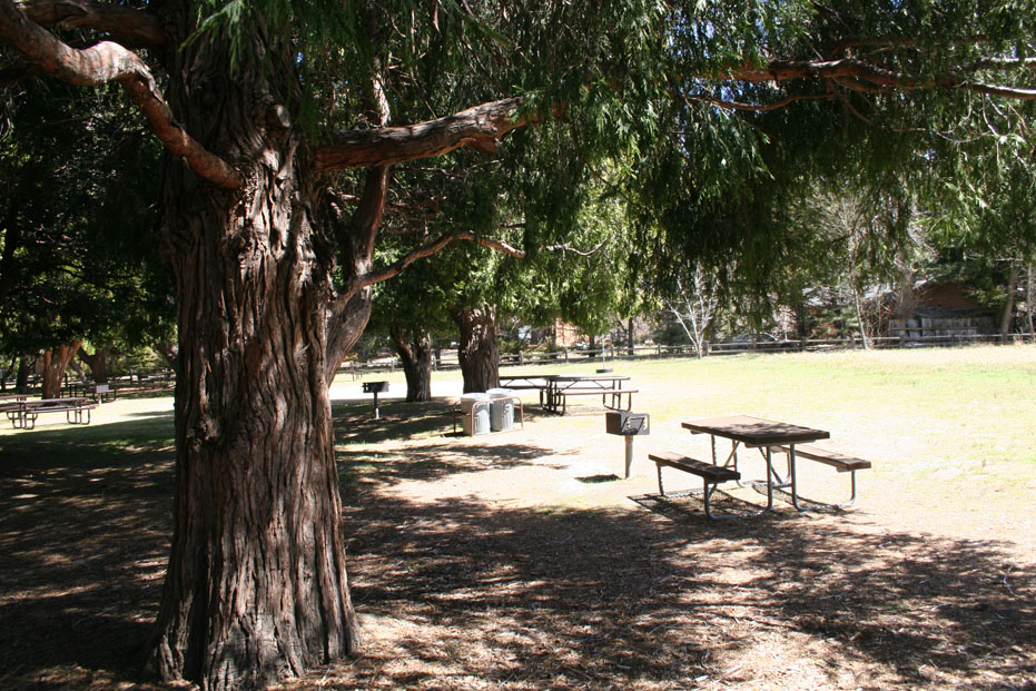 Scenic picnic sites at Idyllwild