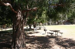 Scenic picnic sites at Idyllwild
