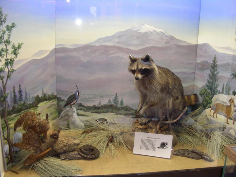 Nature center wildlife exhibit
