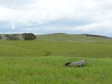 Sylvan Meadows 3.jpg