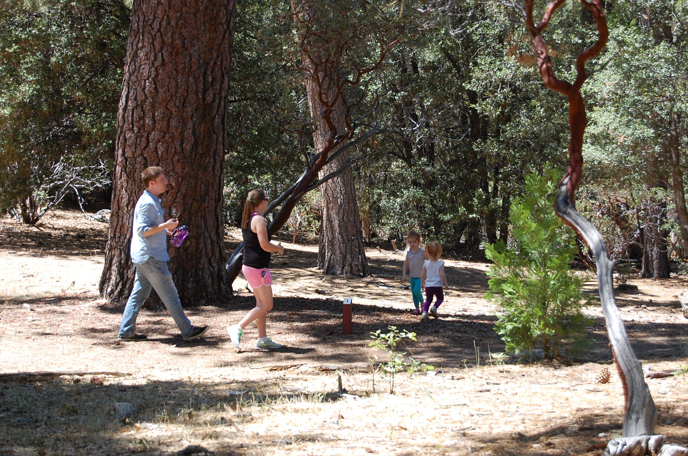 Family hike at Idyllwild