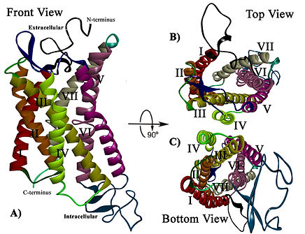 Characterization of kisspeptin receptor structural features and its plausible mechanism of activation by kisspeptin :