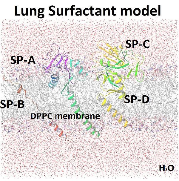Surfactant_model_side_water_label.jpg