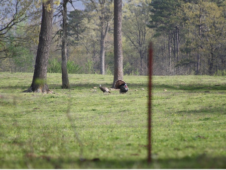 Not Just Turkey Huntin': Lessons Learned & Memories Made