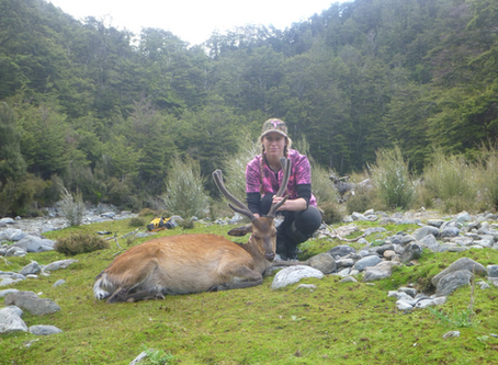 Sika Hunting in the New Zealand Wilderness