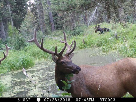 5 Tips for Elk Season Success