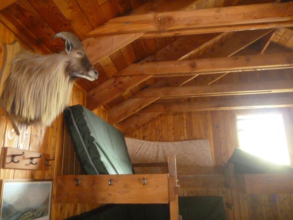 Tahr mount inside of cabin