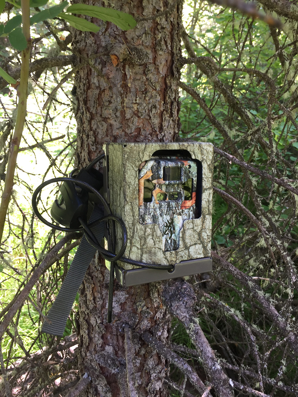 Browning Trail Cam and Security Box