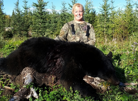 Alberta, Canada, Spot-and-Stalk Bear Hunt
