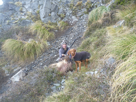 Tahr Hunting in the South Island of New Zealand
