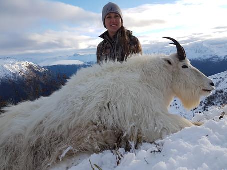 An Alaskan Mountain Goat—The Hunt of a Lifetime